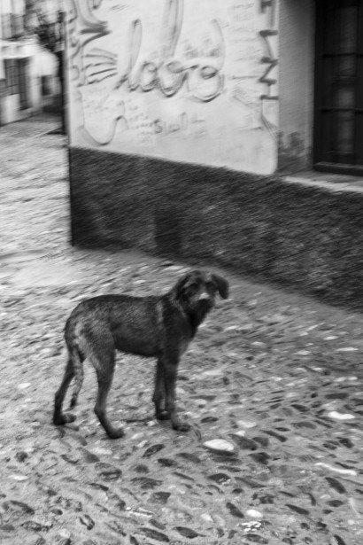 GRANADA.-ANDRES-GARCIA-MELLADO-15.jpg